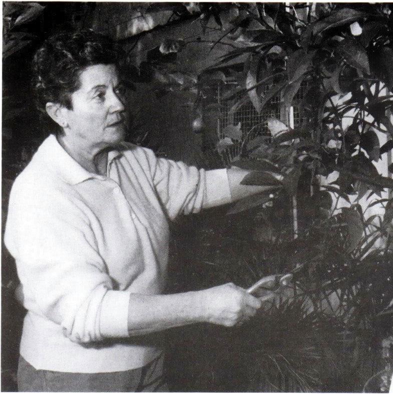 Andre Noel Pruning Leaves